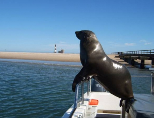 Dolphin & Seal Cruise